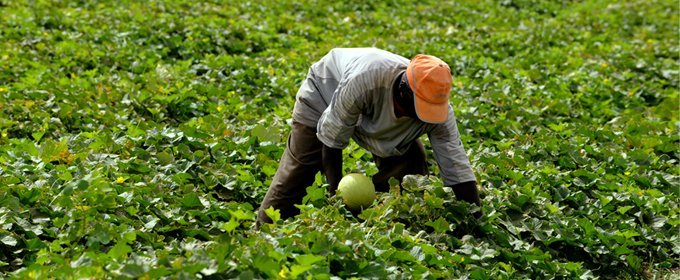 Image Agriculture the future of africa depends on agriculture - african development bank