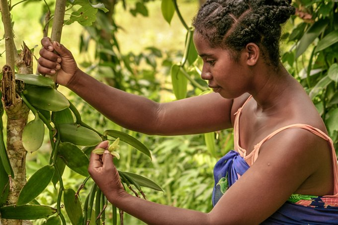 Closing the gender gap in agriculture is economically viable, report concludes