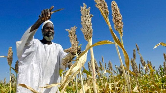 African Development Bank invests in Sudan agribusiness