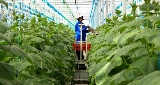 High-Level Officials and private sector leaders to chart actionable plan to accelerate Africa's agricultural transformation