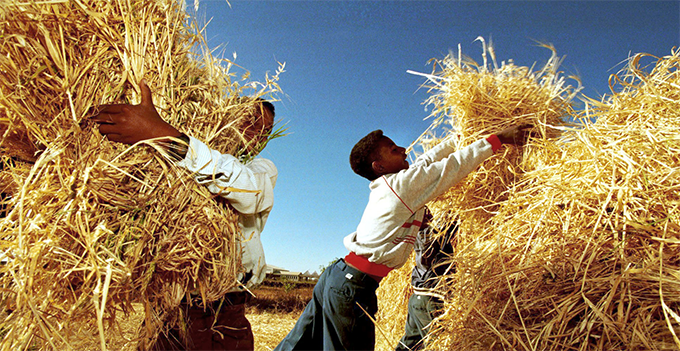 Eritrea: AfDB supports inclusive growth through agriculture and infrastructure development