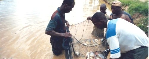 Lake Harvest Fish Farm- Enhancing Sustainable Food Security in Zimbabwe
