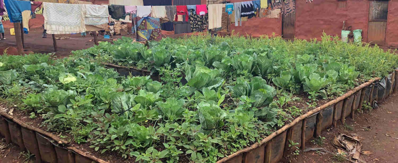 projet pmersa plant