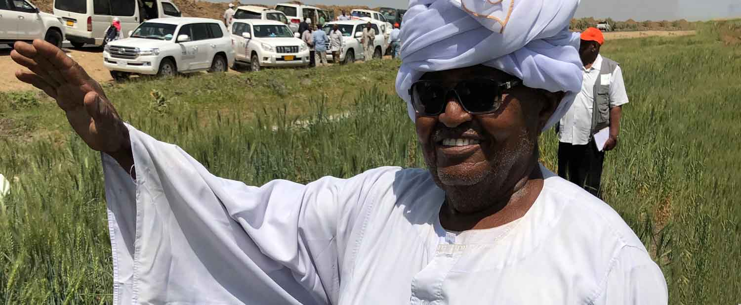 Sudan's record wheat harvest is proof that Bank agricultural transformation program will boost breadbasket goal
