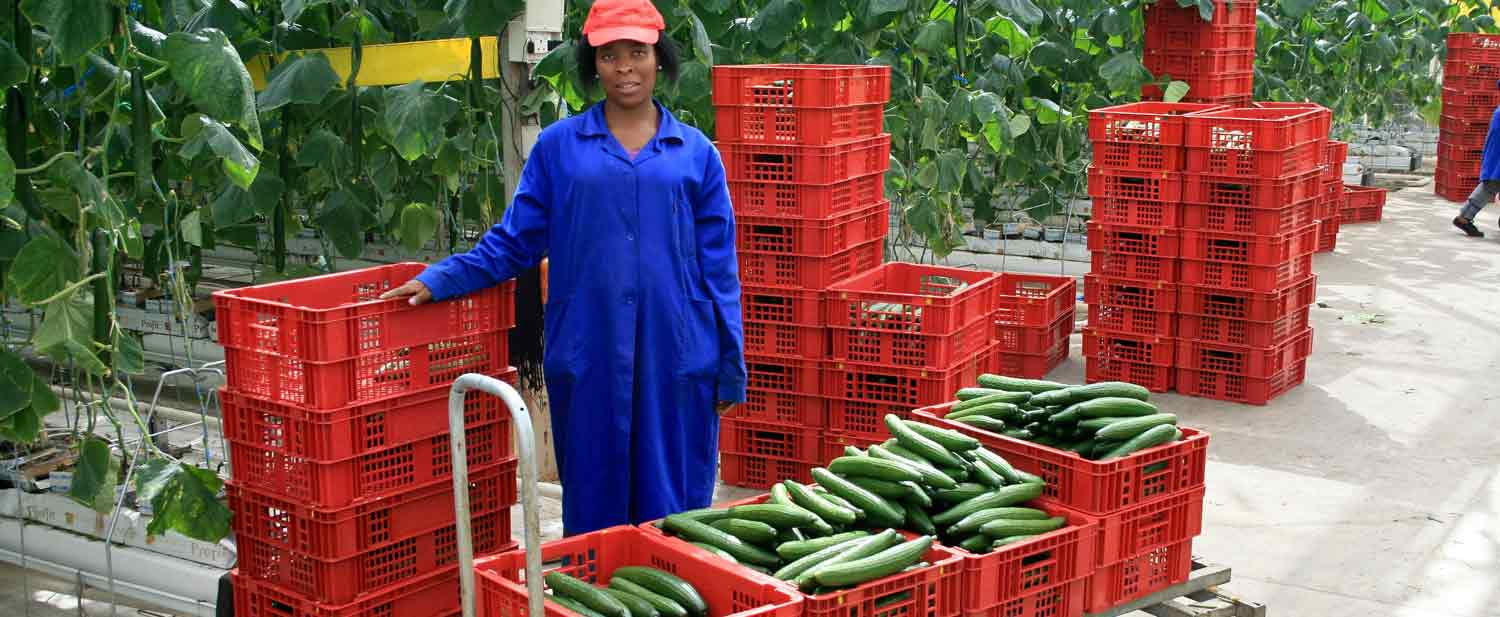 Small and medium enterprises lynchpin of African agriculture – African Development Bank