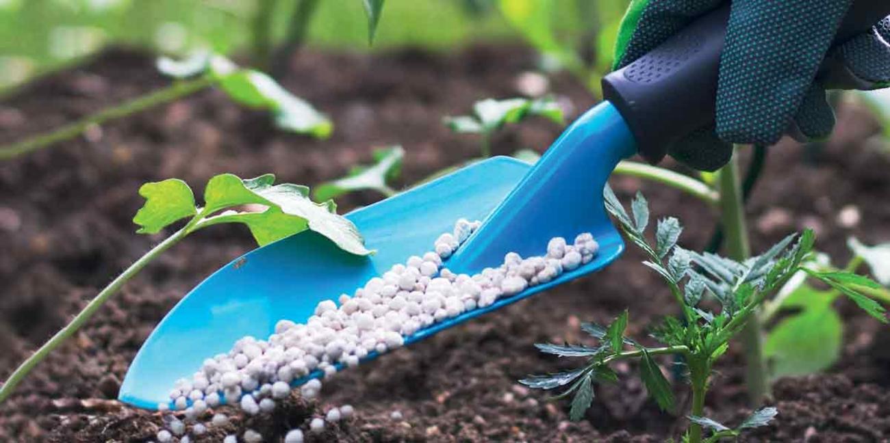 Africa fertilizer