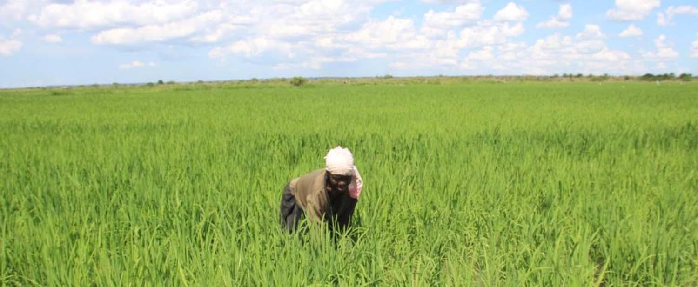 tanzania farmers photo 3 august 2021 2